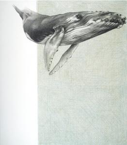 Humpback Whale 1 by Rebecca Clark
