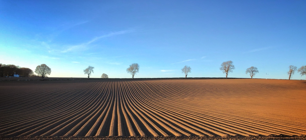 a field prepared for sowing